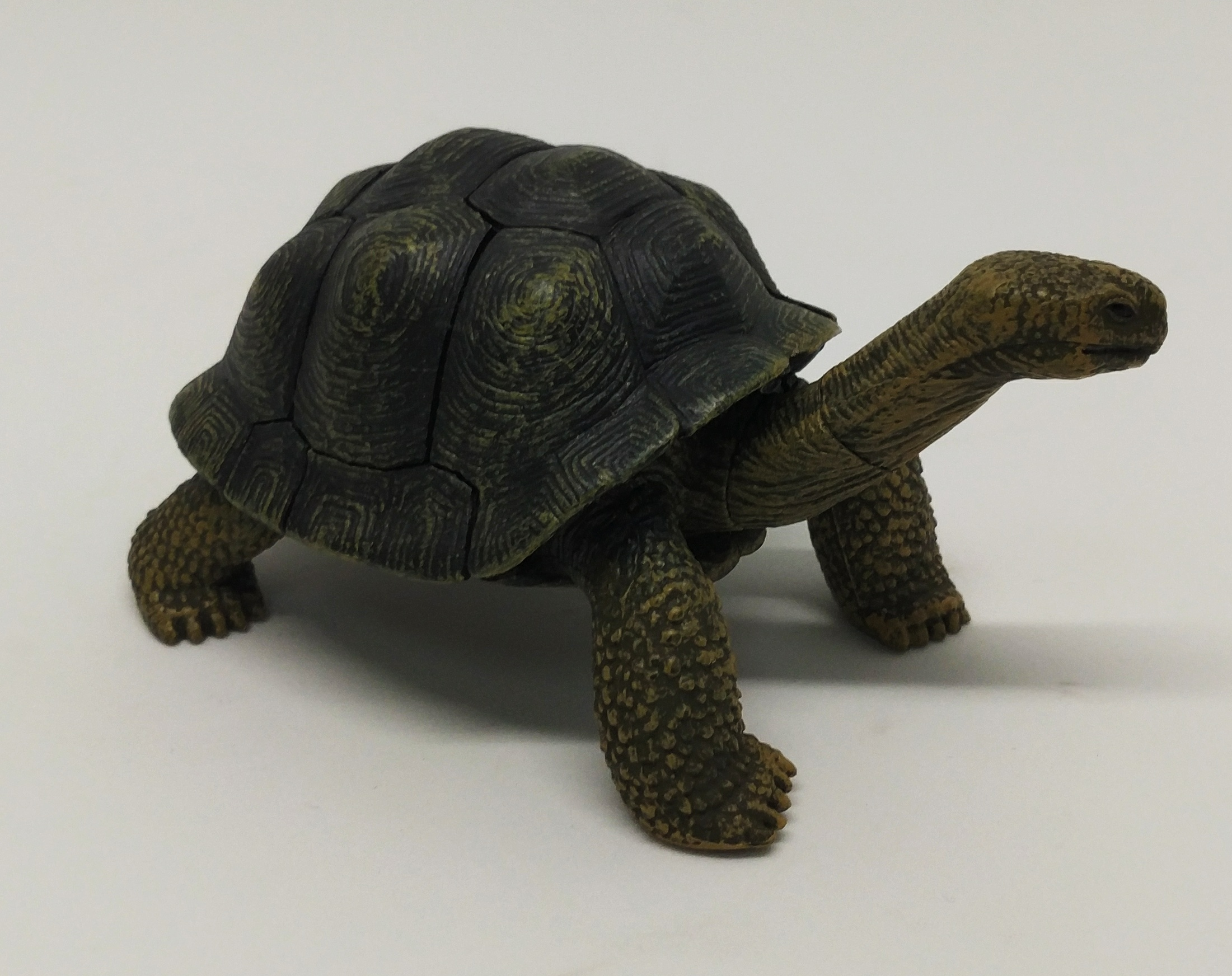 4D Puzzle 加拉巴戈象龜
