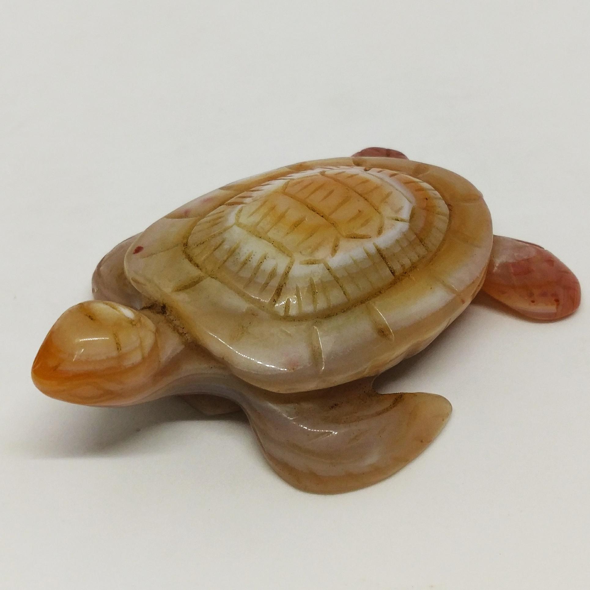 海龜模型 (咖啡色)