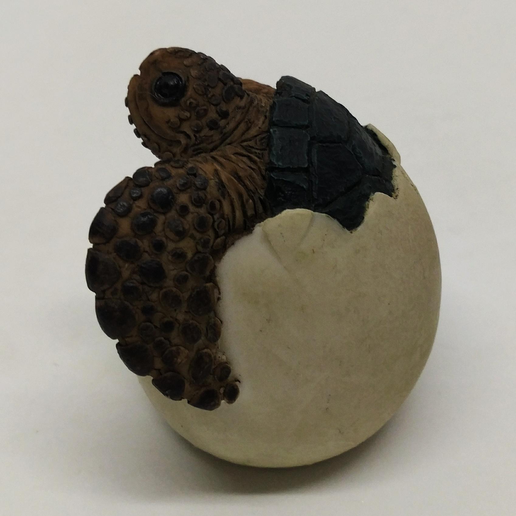海龜模型 (破殼)